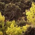 S.S.Ayuntamiento plantará más de 7.000 olmos gracias al proyecto 'Life-+Biodiversidad'